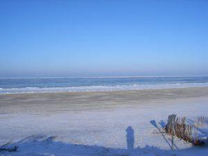 Poliander am Strand