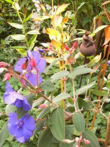 Froschkönig im Höchgarten