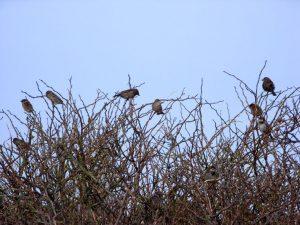 Sichtbare und unsichtbare Vögelinnen und Vögel zwitschern ohne Maschine. (Foto: Gramann)